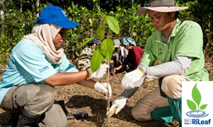 Nestlé Project RiLeaf: Riparian Reforestation and Oil Palm Sustainability Initiative