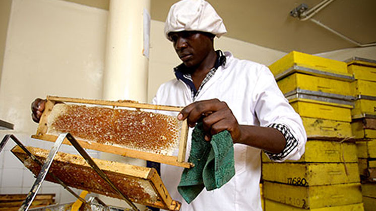 Honey Care Africa wins Nestlé's Creating Shared Value Prize